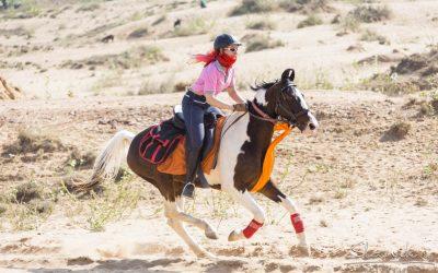Fremde Pferde reiten